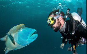 scuba dive liveaboard