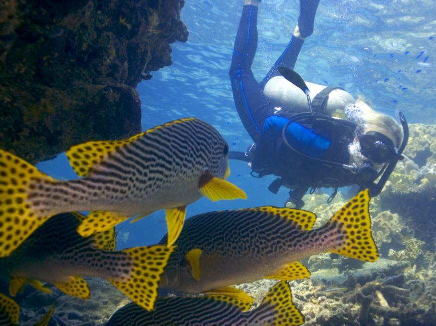 scuba dive reef cruise
