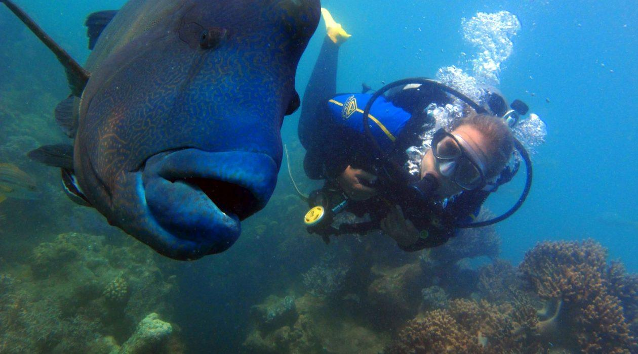 Experience magical marine encounters with massive Maori Wrasse