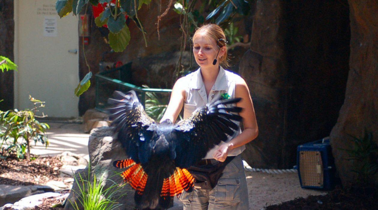 Cairns Zoo Australia