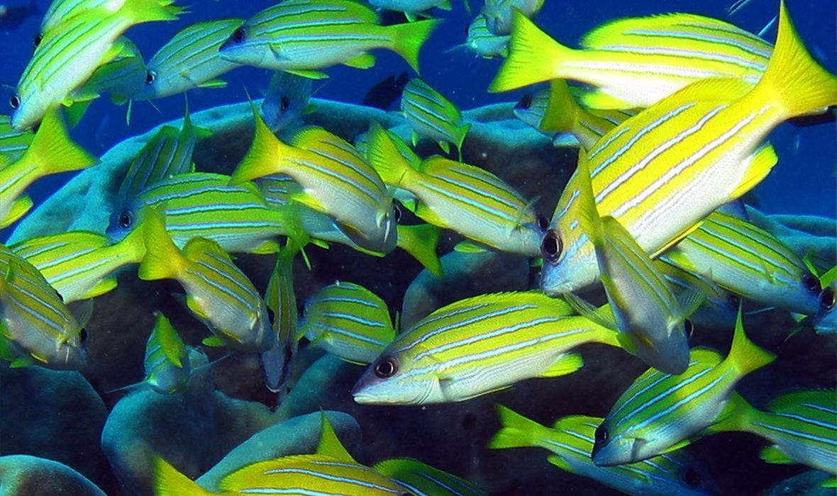 Bright, stunning tropical fish flood the Michaelmas Reef. Snorkel the reef and see several different species